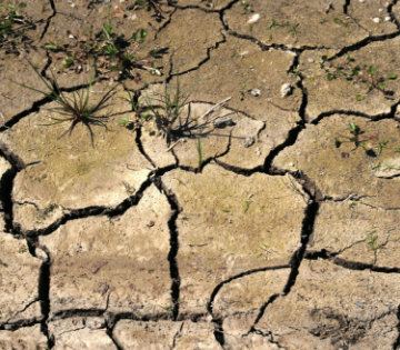 Sydney water restrictions are likely to be implemented soon